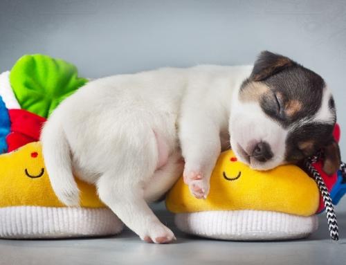 Ideal para Dormir Genial!! Coste 0 €