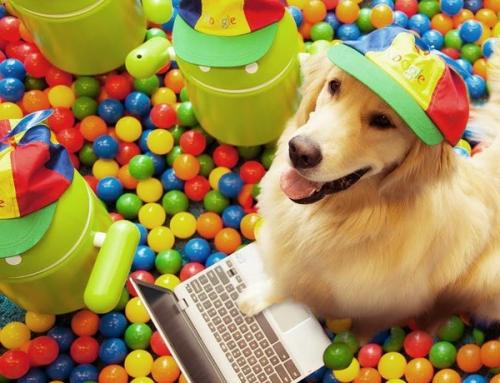 Los alojamientos amigos de las mascotas, serán un factor prioritario para los viajeros que tienen mascotas